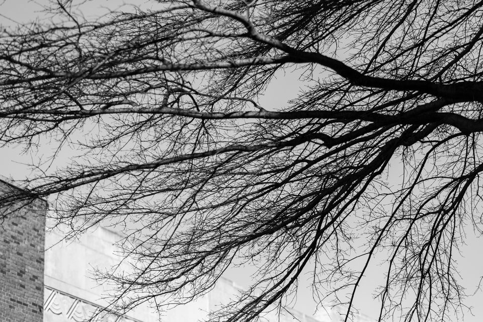 Tree branches. Black and white photograph by Keith Dotson.