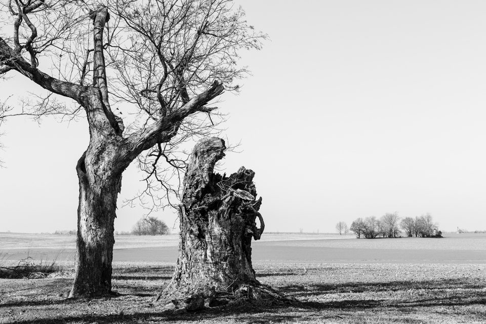 Landscape with one-and-a-half trees. Black and white photograph by Keith Dotson.