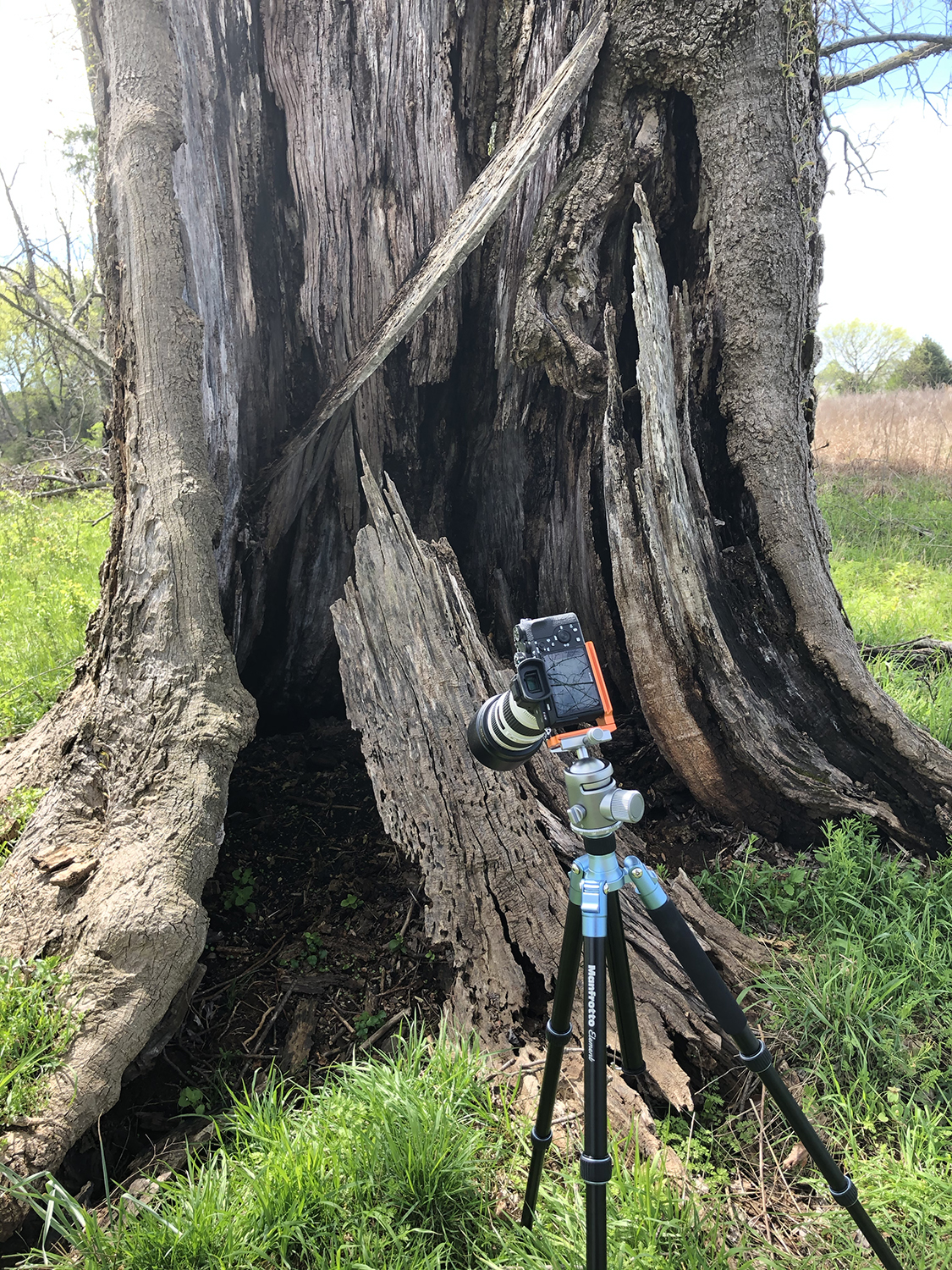 A giant old tree towers over the camera and tripod in this behind the scenes photograph by landscape photographer Keith Dotson.