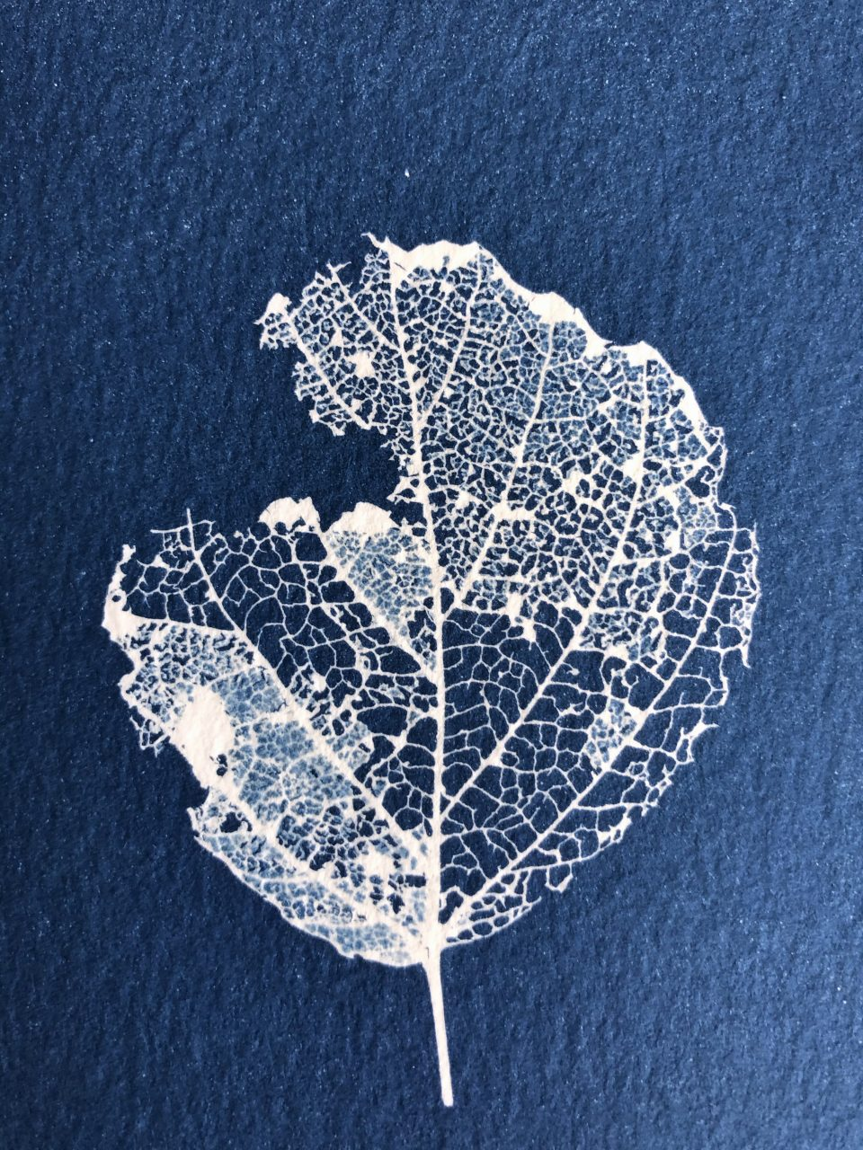 Close-up photo of a finished cyanotype print shows the intricate details of the leaf skeleton and the texture of the watercolor paper.