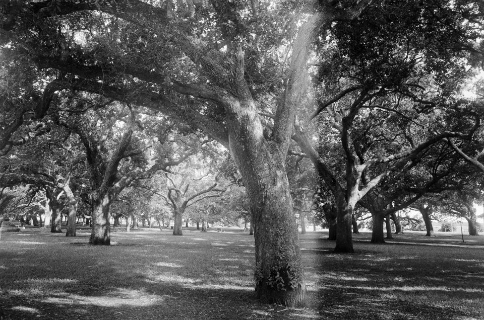This photograph of oak trees in Charleston's Battery park was nearly good, but there's a variation in exposure across the center. Light leak? Something else? Shot on Ilford HP5 with a 28mm Canon lens.