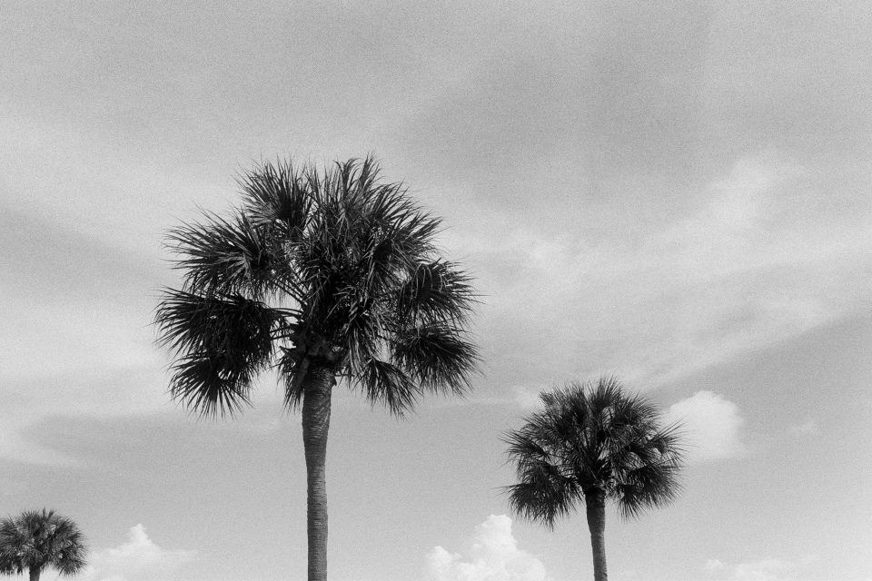 Three palm trees in Charleston. I'll admit, it's a little dull compared to the dramatic failure at the top of this post. The final shot on the roll, this old one-lane bridge appears to be free of flaws or artifacts. Shot with a Canon AT-1 with an early 80s model Canon FD 28mm lens, on Ilford HP5 film.