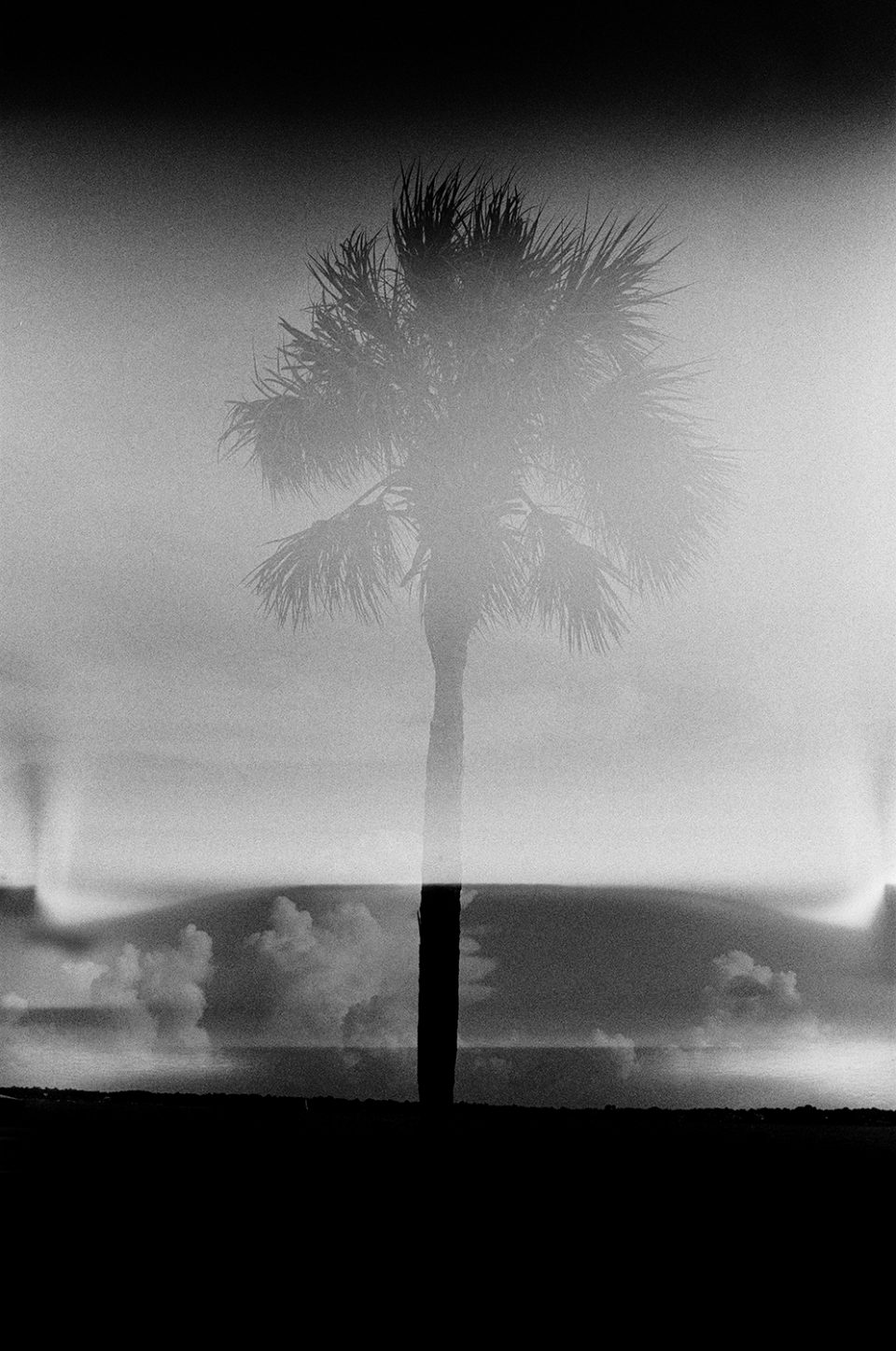 I love this photograph of a palm tree captured along the Battery in Charleston. It's a complete failure of the camera, yet the image is interesting to me.