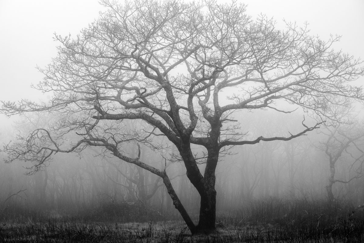 Tree in fog, a black and white photograph by Keith Dotson.