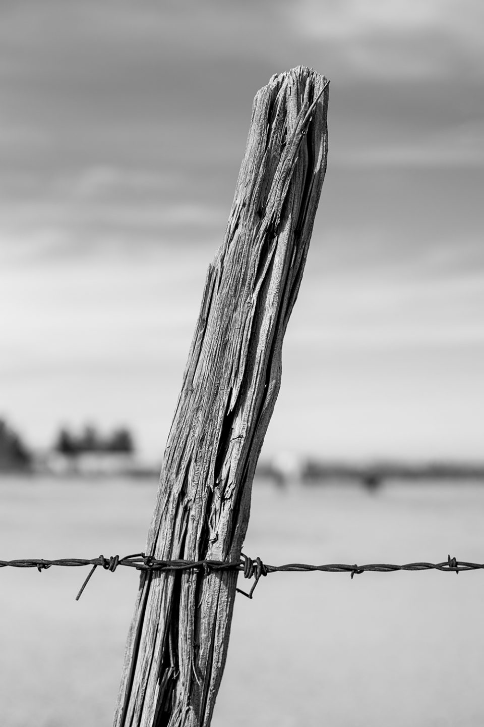 Black and white photograph of a desert fence post with rusty barbed wire.
