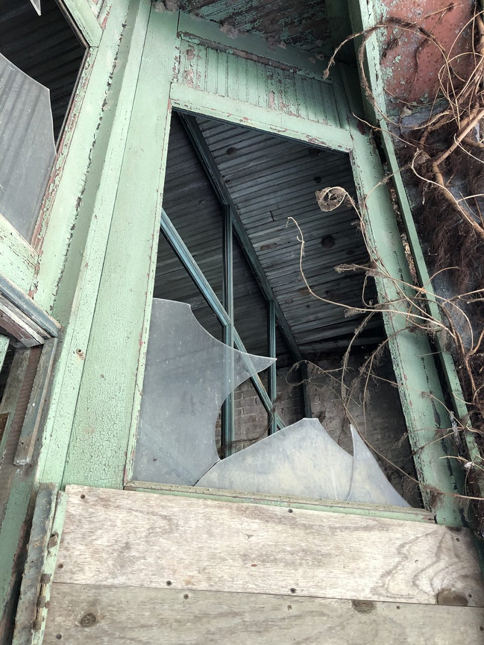 Looking up at the top of the storefront windows, now broken and covered in poison ivy. The Tibbs store occupied a vast space. Photograph copyright 2021 by Keith Dotson. All rights reserved.