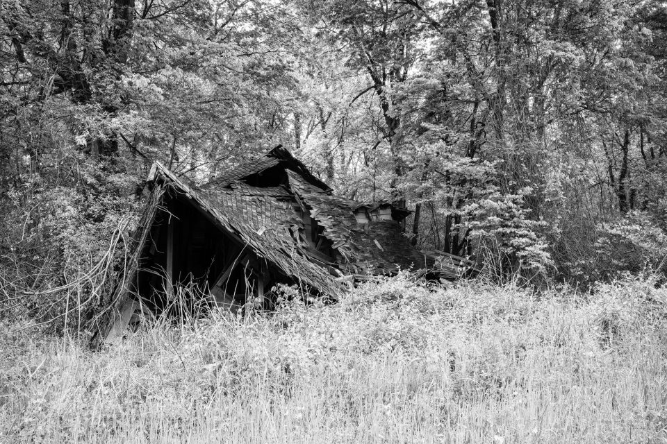 Black and white photograph of a collapsed house among the trees and tall grass. Fine art prints available up to 40 x 60 inches. Click here to learn more.