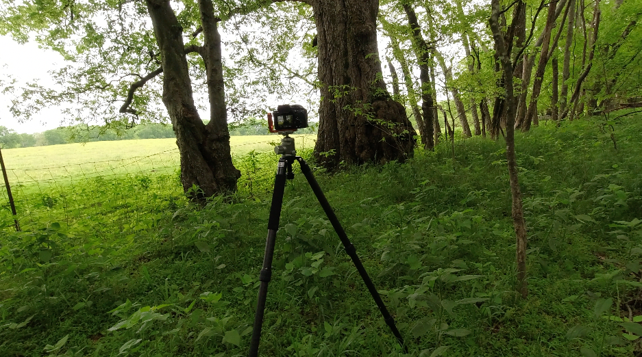 photo of a camera on a tripod in the forest