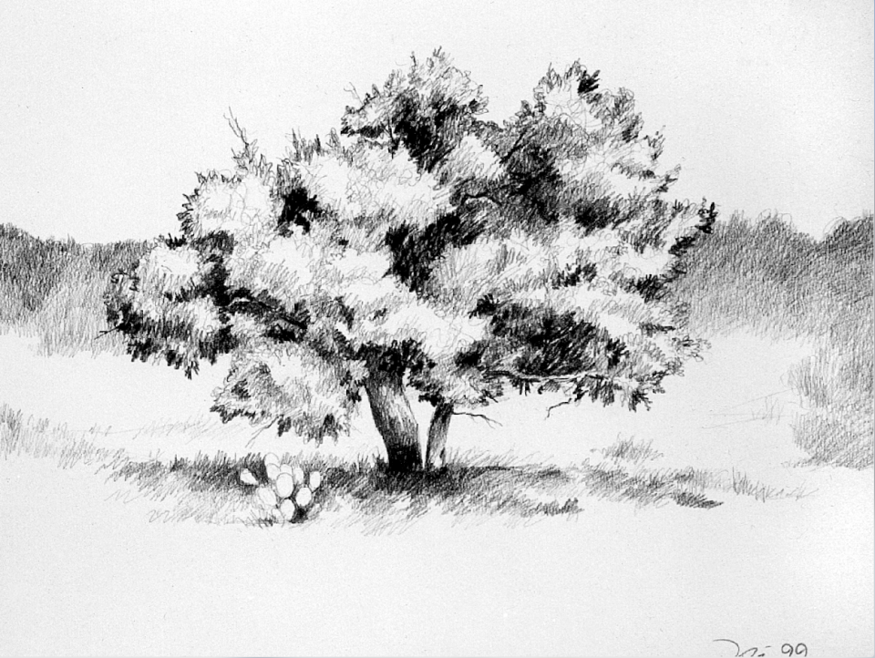 One of my pencil sketches, made in 1999, a landscape featuring a tree and prickly pear cactus.