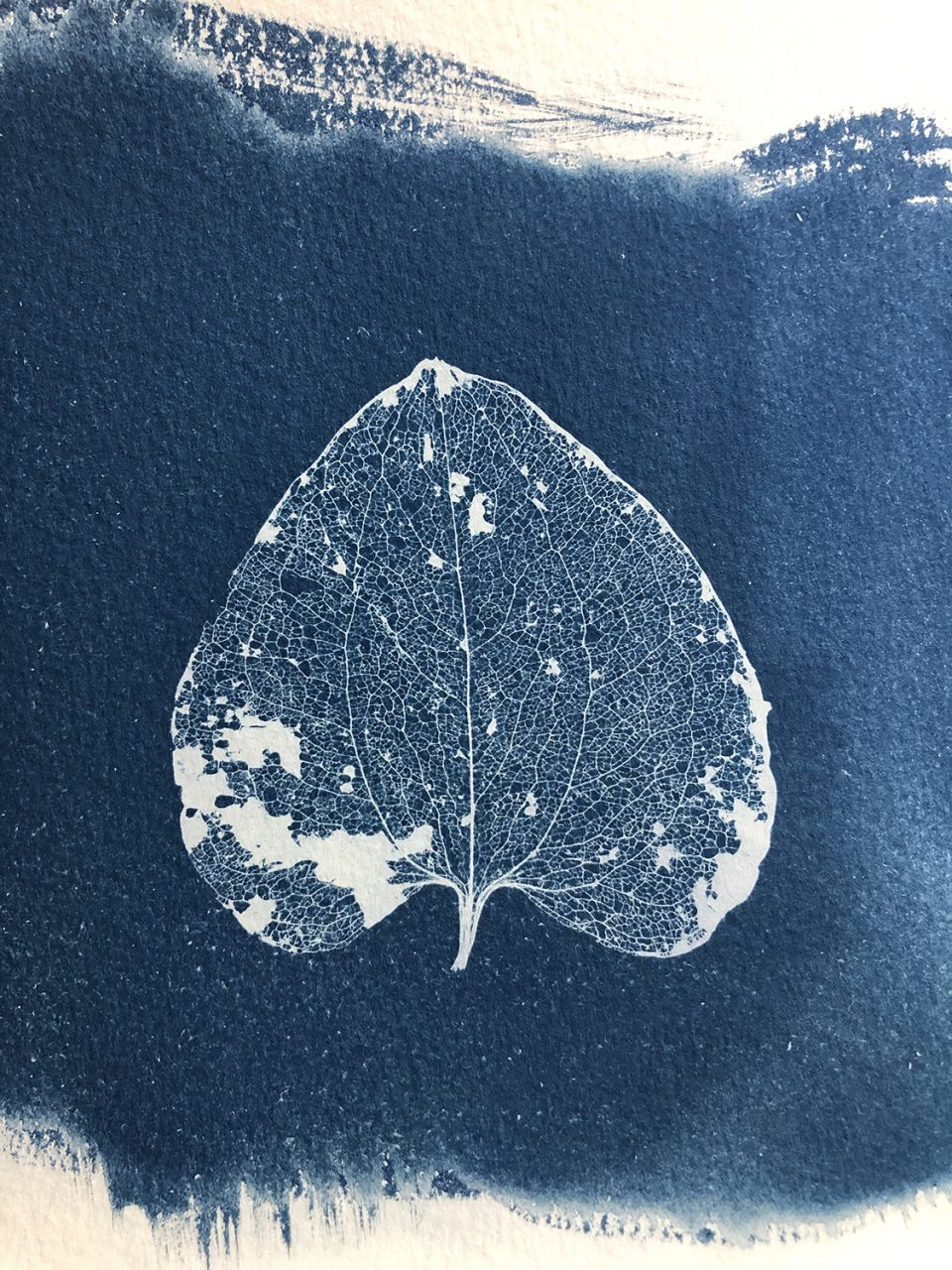 Cyanotype print made from a delicate leaf skeleton.