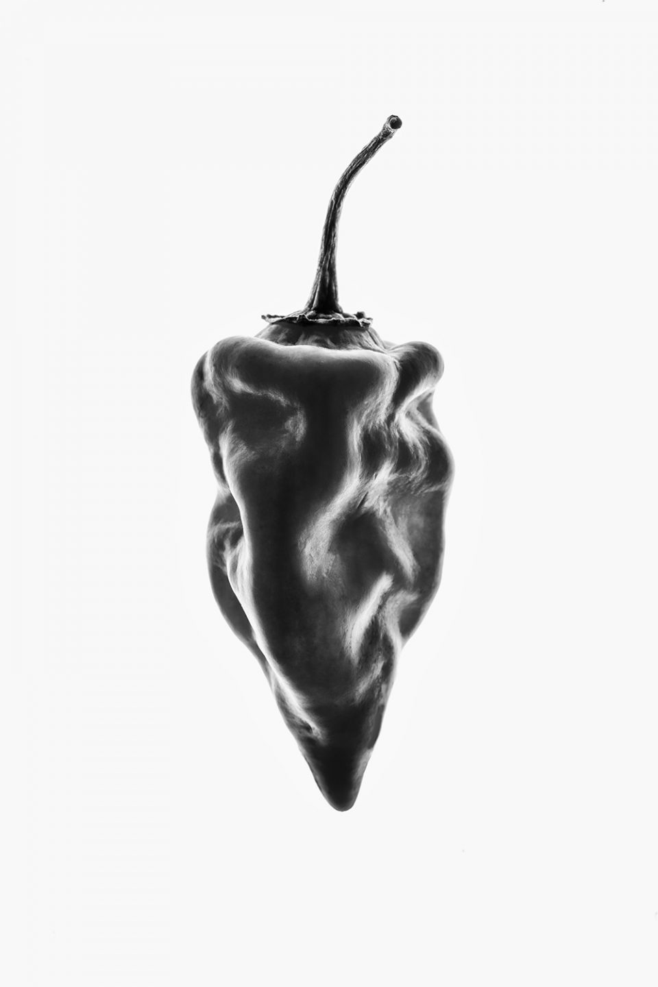 Chili Pepper Illuminated, Black and White Photograph by Keith Dotson.